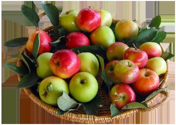 Panier-pommes