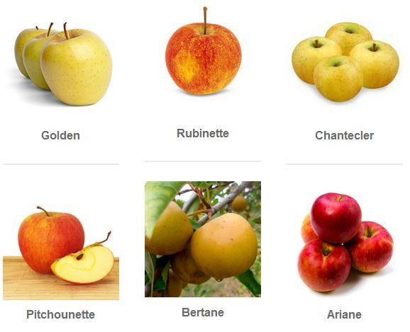 les pommes sur Wikipédia