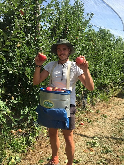 Cueilleur avec des pommes dans les mains